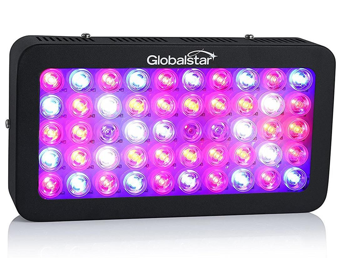 Global Star 300W LED Grow Lights Review - Controlled Indoor
