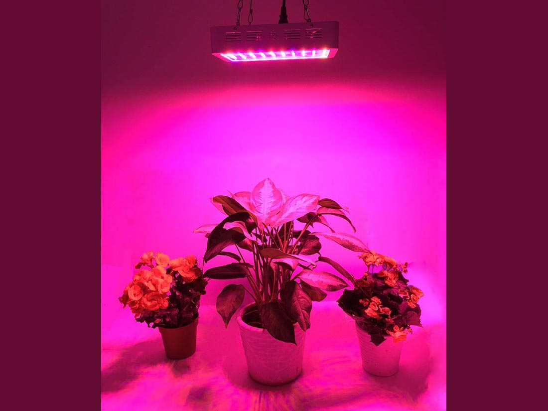 starting lights how assemble good system life seeds a around indoors lighting plants to pin for grow indoor light build